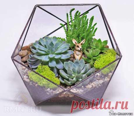 Флорариум— «зелёное царство» за стеклом | Dvamolotka.ru