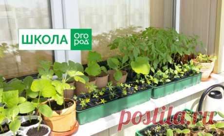 Когда высаживать рассаду в грунт: все культуры в одной таблице | На грядке (Огород.ru)