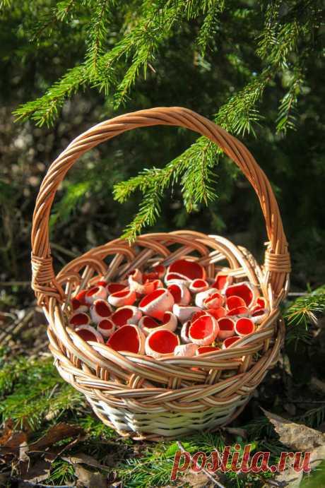 Как с грибами? (конец марта) | Это грибы! | Яндекс Дзен