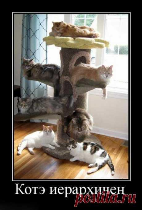 Домотиваторы на тему коты