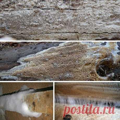 Защита деревянных конструкций от вредоносных грибов | | Для тех, кто любит работать с деревом