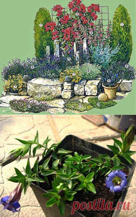 The SCHEME of PLANTING OF FLOWERS ON the ALPINE HILL | Samotsvetik