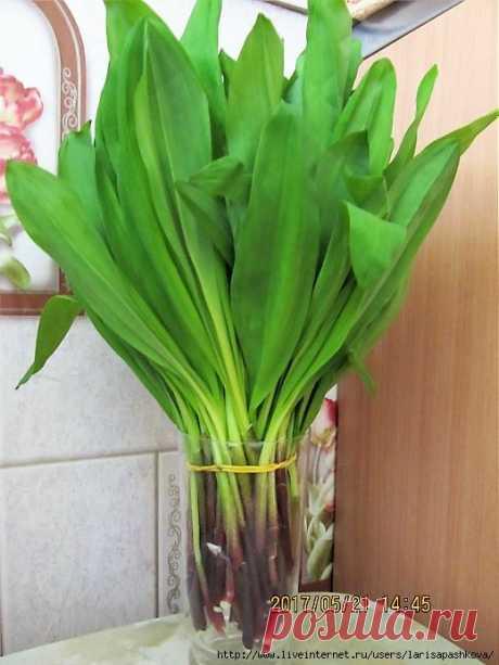 Весенние сибирские природные витамины