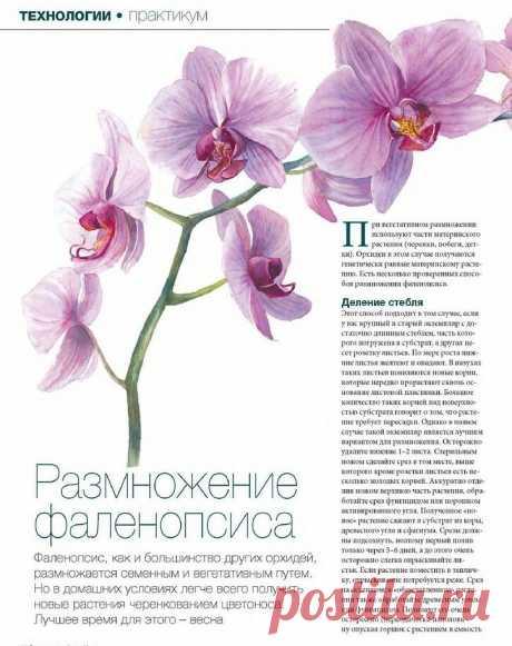 Орхидеи. Размножение.