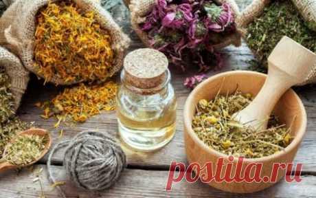 10 лекарственных растений и их ценное использование для Вашего здоровья! Хотите воспользоваться свойствами лекарственных растений? Вот десять растений, которые могли бы помочь.