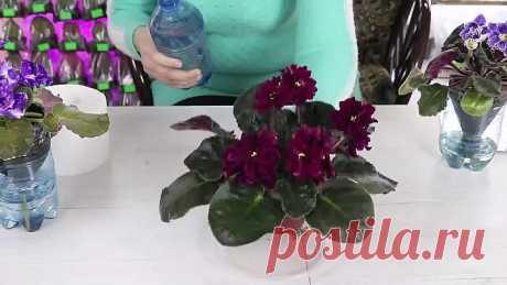 Как спасти залитый цветок! Полезные советы!