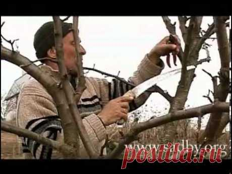 The correct cutting of a pear - YouTube