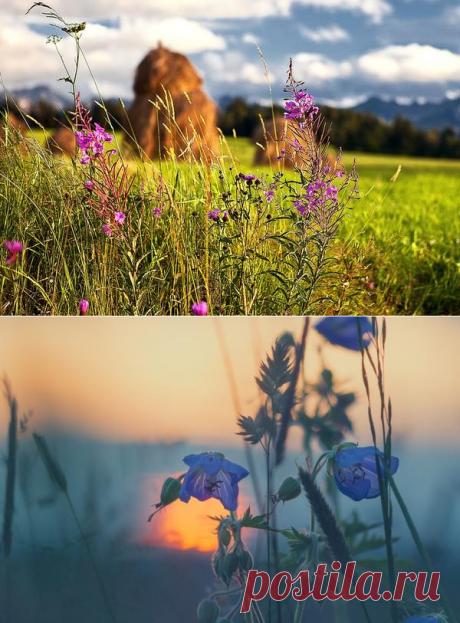 Листаем народный календарь: конец июня - начало июля / календарь садовода-огородника / 7dach.ru