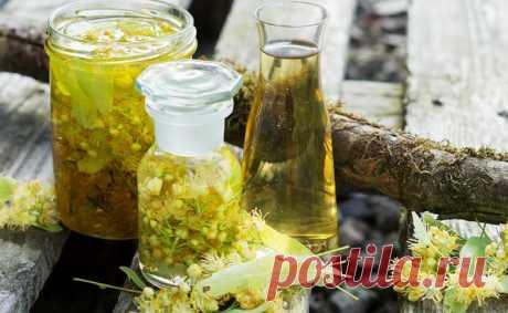 🍀 Липовый цвет: лечебные свойства, противопоказания и рецепты (чай, настой, отвар, ингаляция)