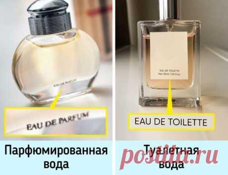 Как выбрать духи, которые будут пахнуть так, будто стоят бешеных денег Ежедневно мы создаем свой образ не только с помощью укладки и одежды, но и запаха. Если вы пользуетесь парфюмом, то наверняка сталкивались с проблемой выбора. Да, можно купить тот, который просто нрав...