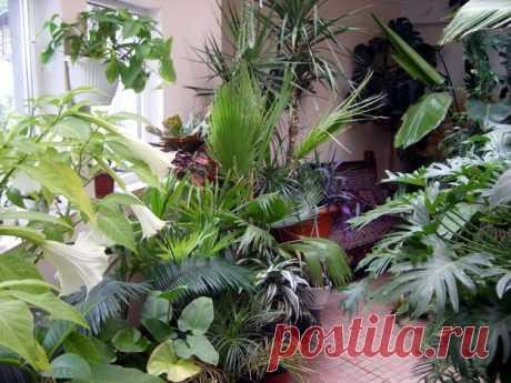 Las plantas de salón | las Anotaciones en la rúbrica las Plantas de salón | MALEFISENTA