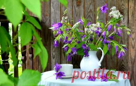 Доброе утро!Приятного субботнего дня и лета в душе!
