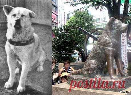 Хатико (яп. ハチ公?) — пёс породы Акита-ину, являющийся символом верности и преданности в Японии. Хатико появился на свет 10 ноября 1923 года в японской префектуре Акита. Фермер решил подарить щенка профессору Хидэсабуро Уэно, работавшему в Токийском университете. Профессор дал щенку кличку Хатико (восьмой). Когда Хатико подрос, он везде непременно следовал за своим хозяином.
