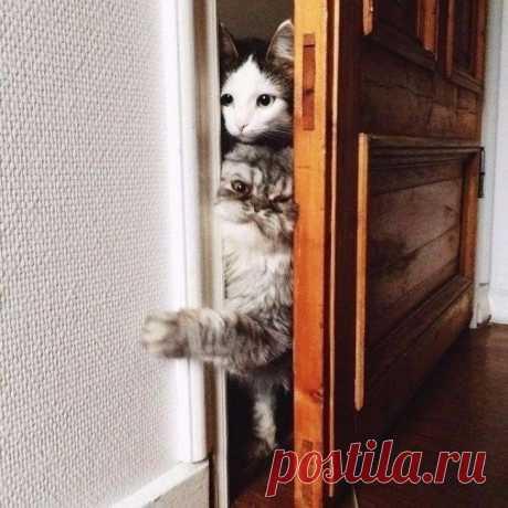 Потому что коты обязаны всегда быть в курсе того, что ты делаешь...