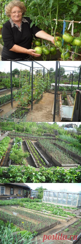 Советы опытной огородницы   6 соток