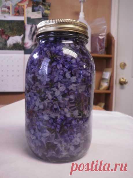 Успей в самый пик цветения: заполни литрушку растительным маслом и фиолетовыми цветками — Мир интересного