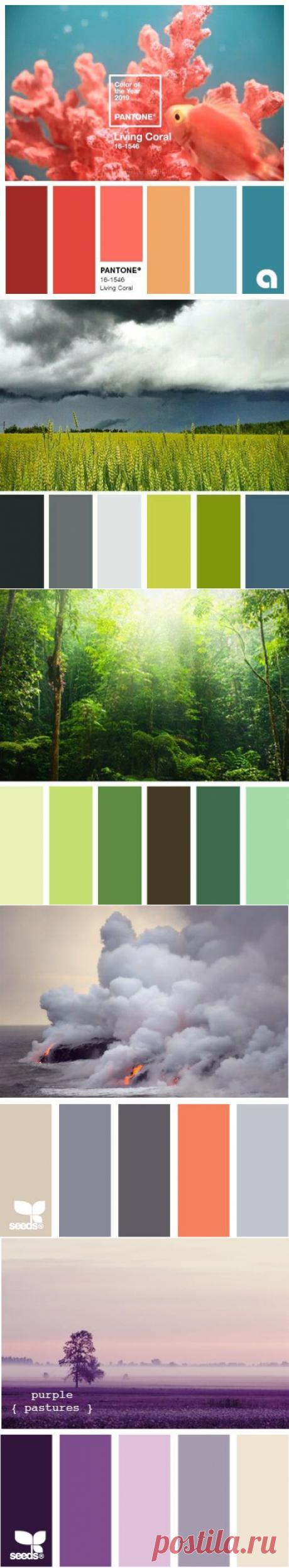 Лучшие сочетания цветов в природе