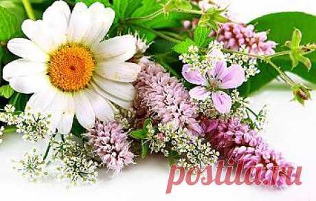 Натуральная косметика. Полевые цветы в рецептах красоты.