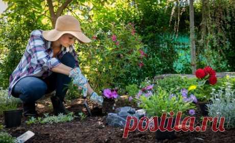 Как исправить некрасивый цветник: 10 безотказных приемов   Цветники и клумбы (Огород.ru)