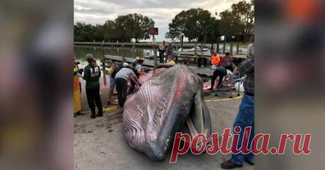 Обнаружен новый вид китов | Публикации | Вокруг Света