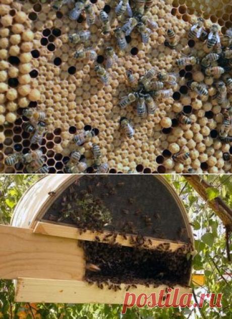 Как размножаются пчёлы? - БиоКорова