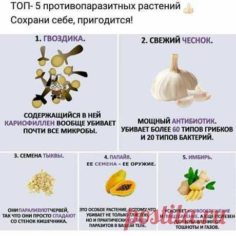Топ натуральных противопаразитарных растений — Полезные советы