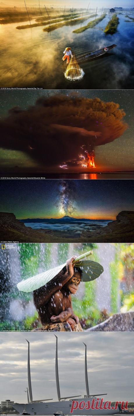 Los más cuadros que quedan en la memoria y discutidos — 2015 — la Ciencia y la vida