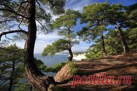 фото водопад сосны деревья: 12 тыс изображений найдено в Яндекс.Картинках