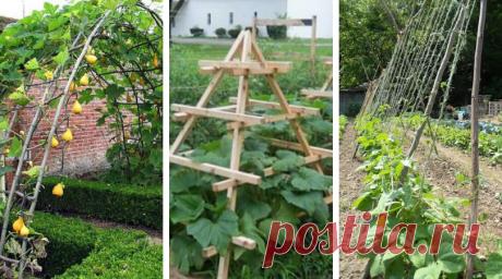 62 лучших способа создания удобных подпорок для овощей | Живу за городом