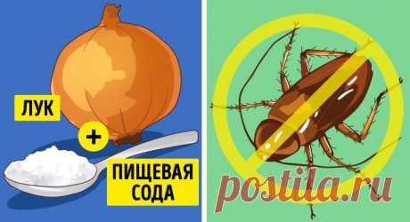 6 эффективных способов избавиться от насекомых в вашем доме | Болтай