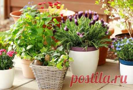 Подкормка цветов дрожжами: применение, рецепты и дозировка