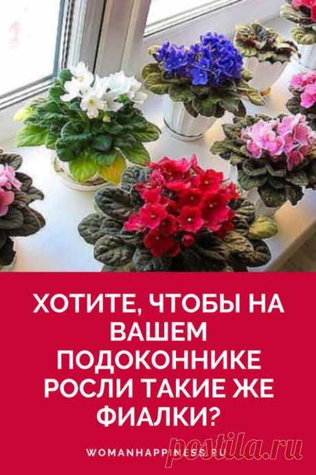 Как ухаживать за фиалками - 5 секретов пышного цветения Обожаю фиалки! Это моя страсть, единственные цветы, которые у меня есть. Как же они прекрасны! Ваши советы очень ценны!