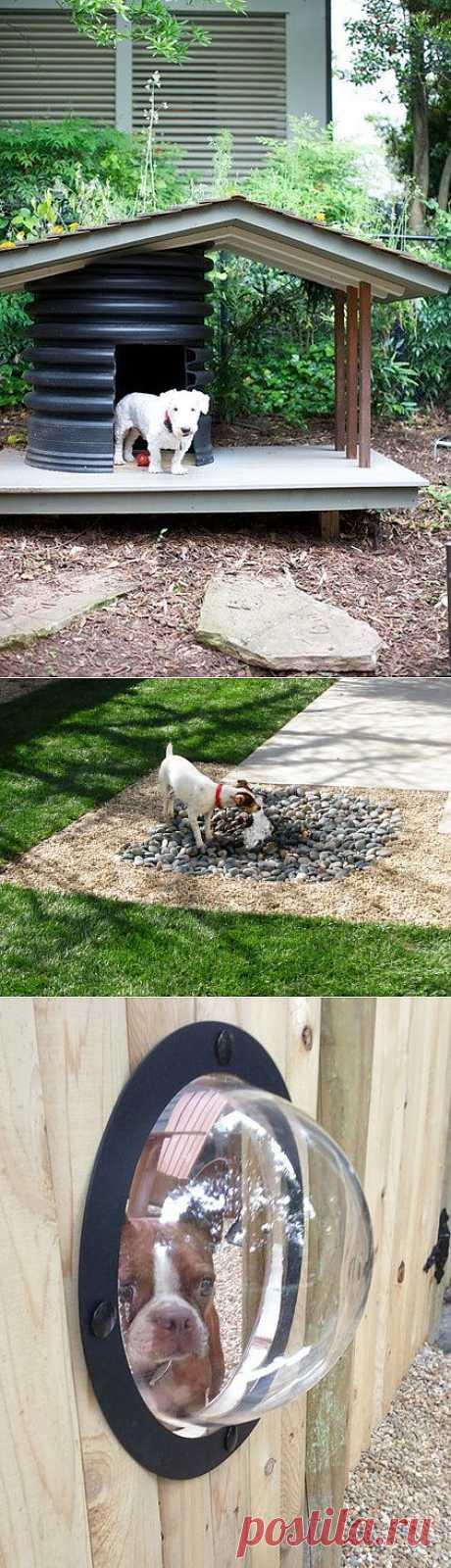 Оригинальные приспособления для собак. 4 идеи | Дом-Цветник