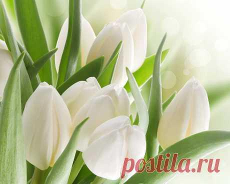 Неповторима каждая Весна, Какой бы не была она по счёту...