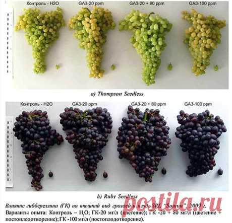 Разбираемся в стимуляторах и регуляторах роста растений.
