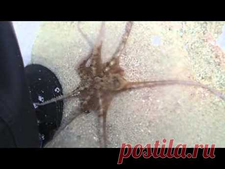 Releasing a stranded octopus and it thanked me - YouTube