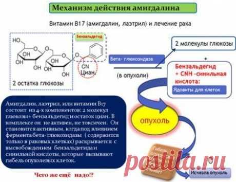 Лечение рака растениями с амигдалином, В 17   Советы целительницы