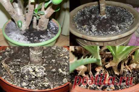 Как удалить плесень и белый налёт в цветочных горшках / Домоседы