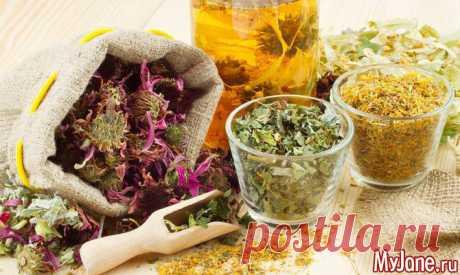 Лекарственные травы. Заготовка в июле-августе - лекарственные травы, польза лекарственных трав, мать-и-мачеха, календула, донник, мята, мелисса