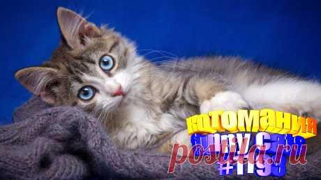 Вам нравится смотреть видео про смешных котов? Тогда мы уверены, Вам понравится наше видео 😍. Также на котомании Вас ждут: видео кот,видео кота,видео коте,видео котов,видео кошек,видео кошка,видео кошки,видео о котах, видео про кота, видео смешные кошка, для кошек, кото приколы, кошка видео смешные, кошки 2020, приколы о кошек, про кошек, ролики про животных, самые смешные коты, смешные видео с кошками, смешные котики