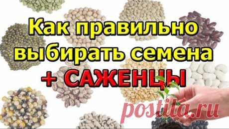 Los consejos como escoger correctamente las semillas y los plantones