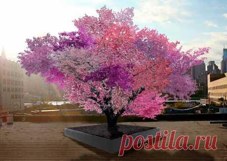 Фруктовое чудо в Нью-Йорке: 40 видов плодов на одном дереве