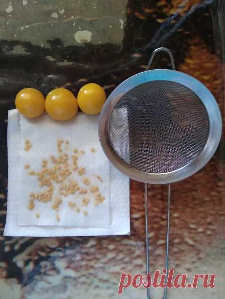 Семена томатов на следующий год. Главное - не забыть и не перепутать.)   Люблю я помидоры!   Яндекс Дзен