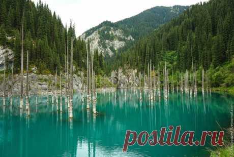 Есть такое озеро Каинды. Уникальная жемчужина Казахстана