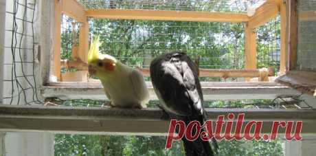 Вольер для попугая НА БАЛКОНЕ | Попугай корелла у вас дома!