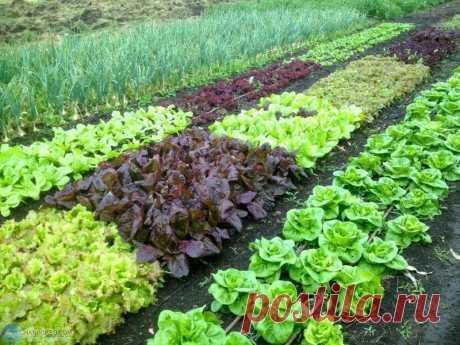 Простые удобрения для дачных растений Простые удобрения для растений, которые не нужно специально покупать.