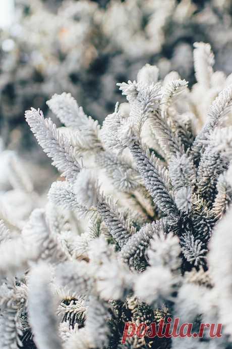 Загадки про зиму с ответами – 85 самых лучших загадок – ladyvi.ru