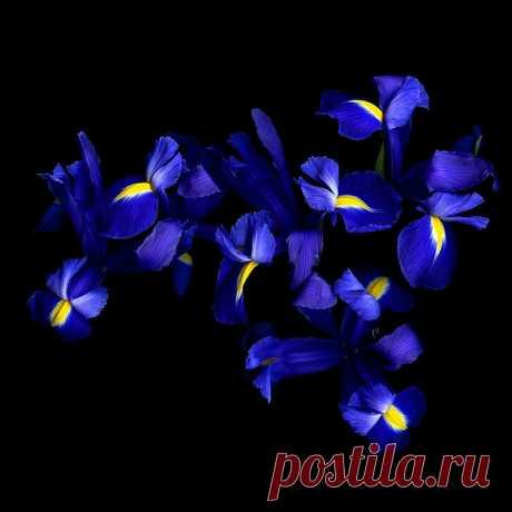 Цветы от фотографа Magda Indigo