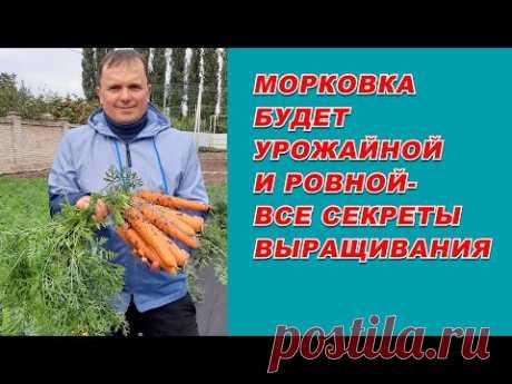 """Выращивание урожайной морковки от """"А"""" до """"Я""""- самые полезные советы."""
