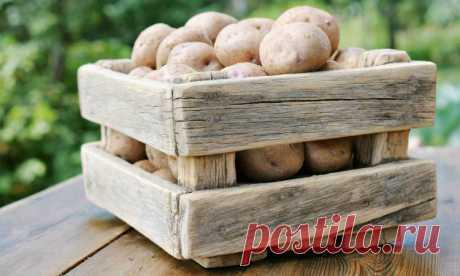 Хранение картофеля или как создать идеальные условия